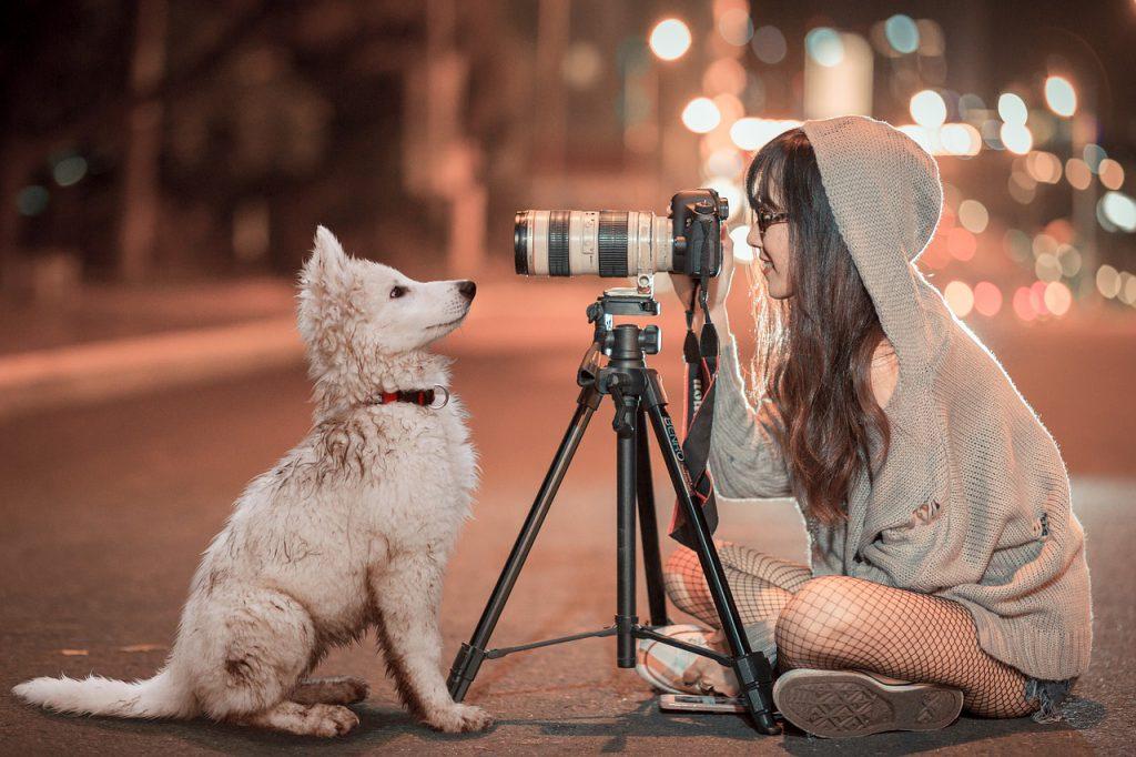 Ein weißer Welpe blickt direkt in die Kameralinse.
