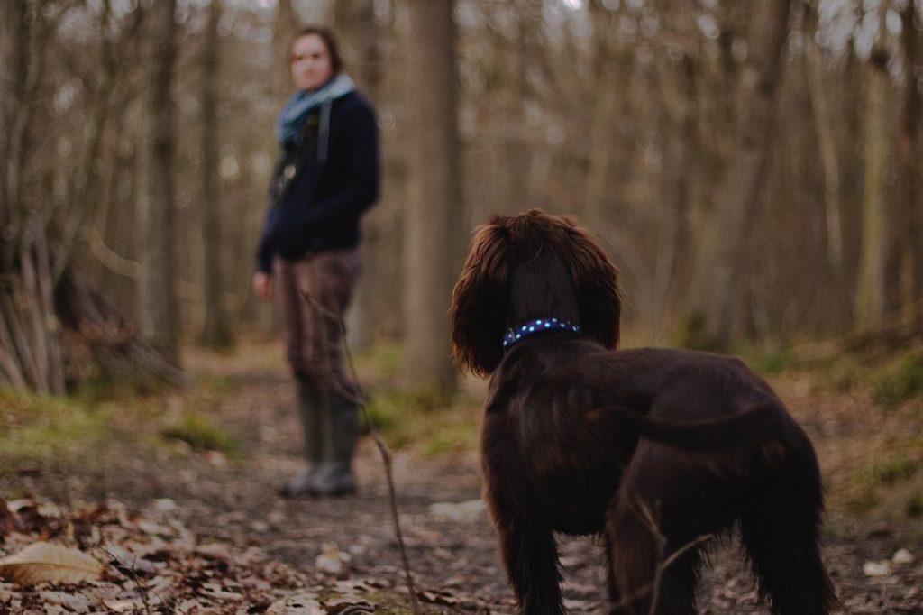 Ein kleiner brauner Jagdhund-Mix ist zusammen mit seiner Halterin im Wald und wartet schwanzwedelnd auf das nächste Signal seiner Halterin.