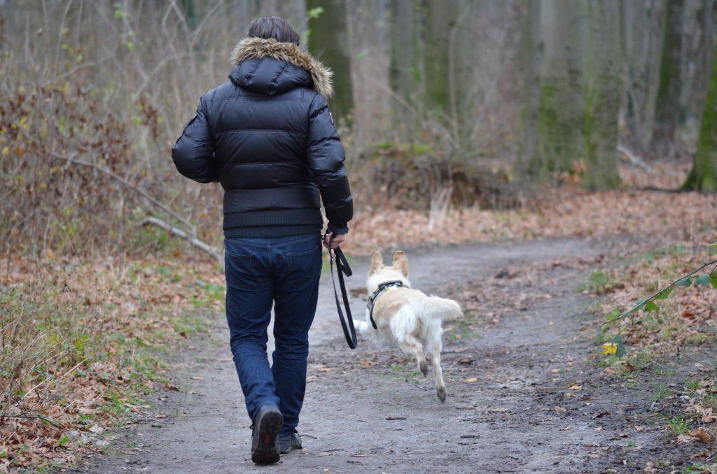 Freilaufender Hund sprintet auf dem Waldweg los, um Wild zu verfolgen. Das Herrchen läuft mit Leine in der Hand hinterher.