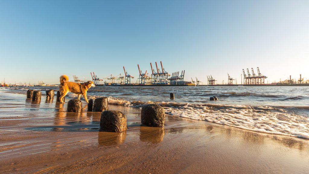 Hund am Strand der Elbe. Der Hamburger Hafen ist im Hintergrund zu sehen.