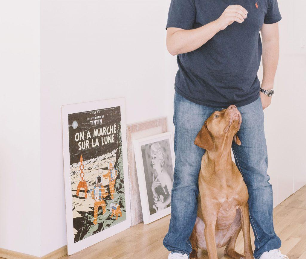 """Halter trainiert mit seinem Hund die Übung """"sicherer Ort"""""""